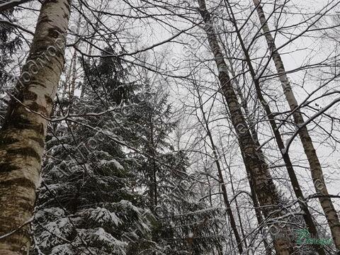 Минское ш. 33 км от МКАД, Сивково, Участок 12 сот. - Фото 3