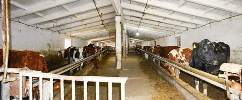 Фермерское хозяйство в Крыму - Фото 2