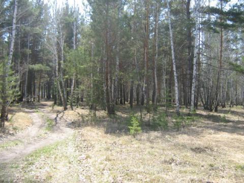 Участок 119 соток в поселке Чернолучье - Фото 2