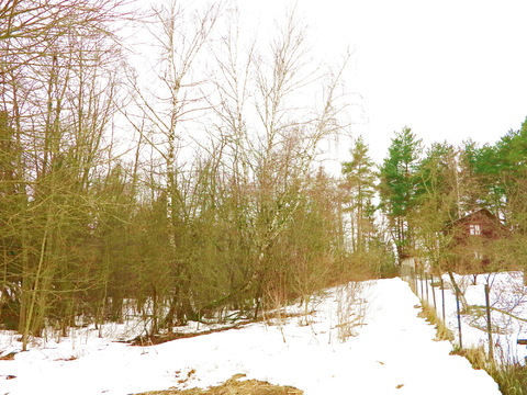 52 сотки у леса, крайний. Звенигород 8 км. к.н. 50:20:0090218:314 - Фото 4