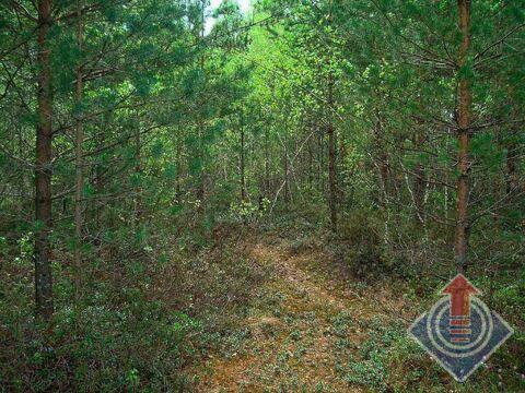 Продажа земельного участка 12 соток в СНТ Омхово у д. Митяево - Фото 4