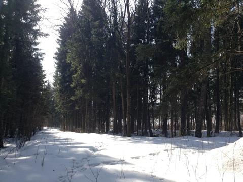 Участок, Дмитровское ш, 48 км от МКАД, Муракино. Дмитровское шоссе 48 . - Фото 3