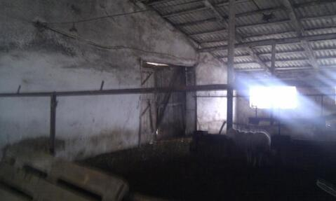 Продажа готового бизнеса, Бехтеевка, Корочанский район - Фото 5