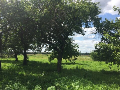 Продам участок в п. Сараи Рязанская области - Фото 4