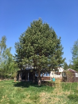 Продажа земельного участка и дачного дома - Фото 5