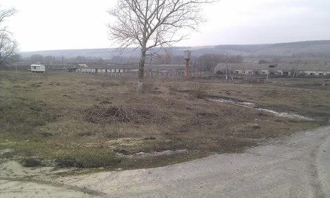 Продажа фермы в Корочанском р-не - Фото 4