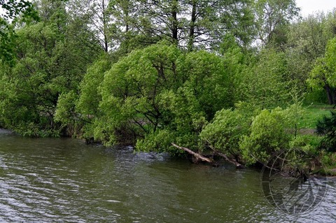 Участок 5,5 соток на краю леса, СНТ Дубрава, Климовск, Подольск. - Фото 4