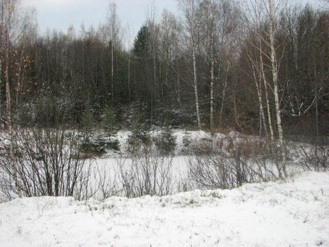Участок 15 соток с берёзами Фряновское ш 40 км от МКАД д Малые Петрищи - Фото 4