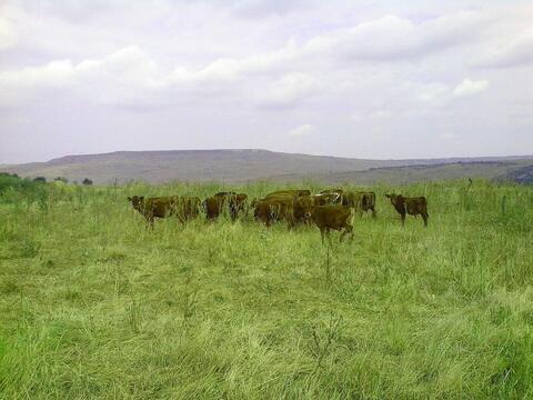 Продается ферма с животными на участке 60 га, с. Темнолесская - Фото 5
