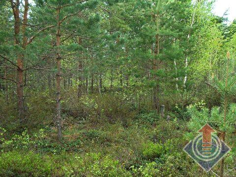 Продажа земельного участка 12 соток в СНТ Омхово у д. Митяево - Фото 5
