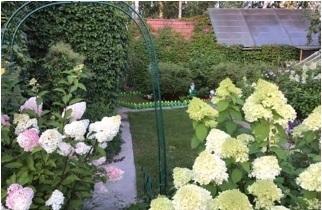 Дача, Вишневый сад - Фото 4