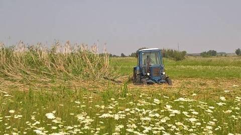 Участок сельхозназначения в Верхнемамонском районе - Фото 2