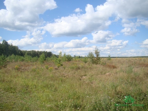 4,2 Га С/Хпроизводство в д.Ельцы - 85 км от МКАД - Фото 3