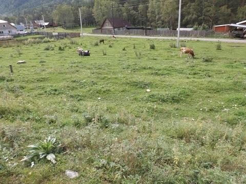 Земельный участок под ИЖС в Горном Алтае - Фото 1
