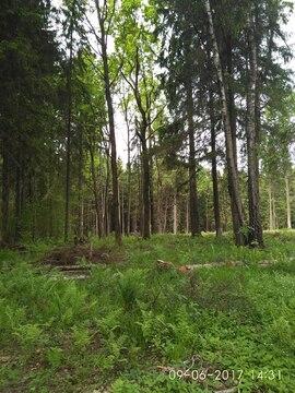 Земельный участок 10 соток по Рогачевскому шоссе, деревня Поповка - Фото 2