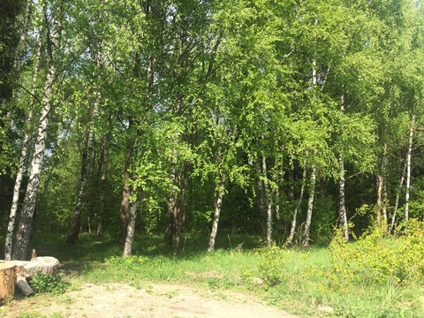 Сатино-Татарское СНТ Сатино 6 соток у леса - Фото 5