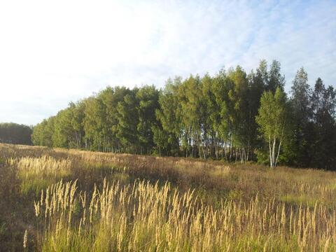 Продажа поляны в лесу 10 га на берегу озера - Фото 2
