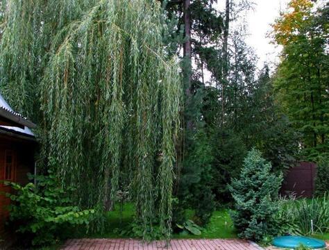 Коттедж, качество отличное, в лесу, на участке деревья,40 км Минское ш - Фото 3
