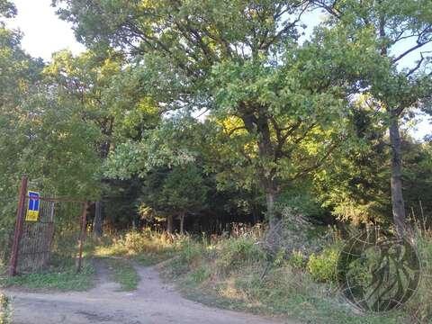 Участок 5,5 соток на краю леса, СНТ Дубрава, Климовск, Подольск. - Фото 5