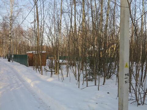 12 сот с лесными деревьями. Газ, канализация.Земли населенных пунктов. - Фото 2