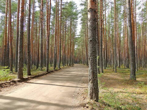 Продам участки на берегу Волги Ново-Окатово г. Калязин - Фото 4