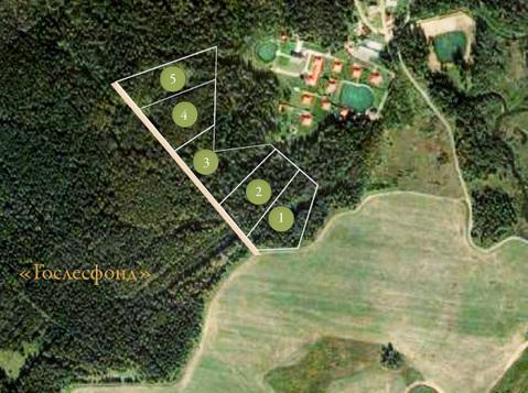 Лесной участок 5 гектаров в первозданной природе, река, лес, ИЖС - Фото 2