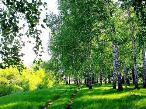 Продам 10 гектаров земли, дачное х-во, за 500 тысяч рублей - Фото 2