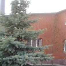 """Сад """"Садко"""" Магнитогорск - Фото 1"""