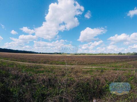 Продам земельный уч. в деревне Белавино 12 сот ИЖС - Фото 3
