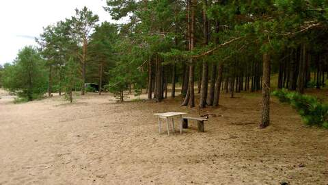 Продается земля 1330 соток, поселок Большой Бор - Фото 5