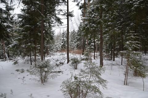 Лесные участки в кп Самар-1 - Фото 3