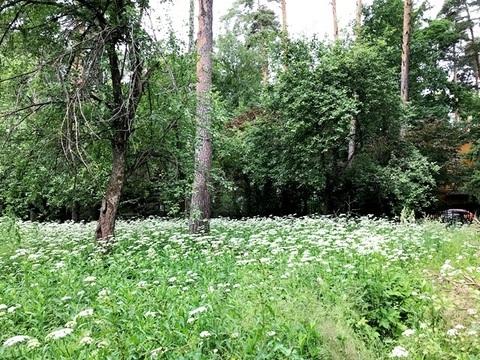 Лесной участок 25 соток на Ярославском шоссе - Фото 2
