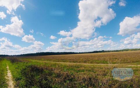 Продам земельный уч. в деревне Белавино 12 сот ИЖС - Фото 2