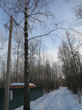 12 сот с лесными деревьями. Газ, канализация.Земли населенных пунктов. - Фото 3