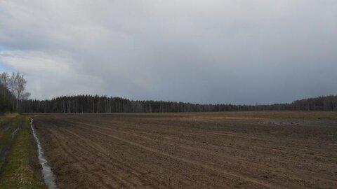 Продаётся земельный участок 5 га в Московской области - Фото 2