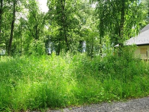 Участок 10 соток с лесными деревьями. - Фото 3