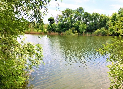 1400 соток с прямым выходом на пруд всего в 3 км. от горо - Фото 4
