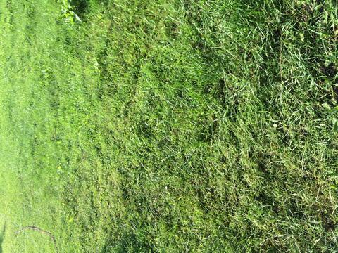 Продам земельный участок СНТ Медик, Земельные участки в Конаковском районе, ID объекта - 201219854 - Фото 1