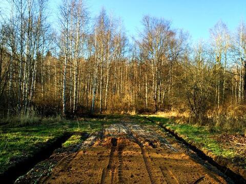 При лесной участок 10 сот/ д. Сазонки, 39км. от МКАД по Дмитровскому ш - Фото 2