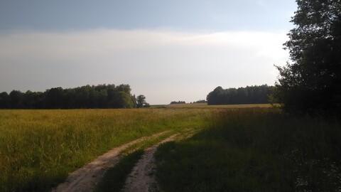 Продается ровный, сухой земельный участок, площадью 71,4 га - Фото 5