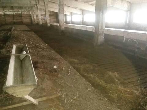 Сдам недорого ферму 72 км от МКАД Киевское шоссе д.Шилово Боровский - Фото 3