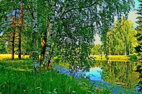 Продам 10 гектаров земли, дачное х-во, за 500 тысяч рублей - Фото 4