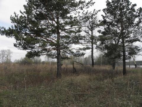 Продам дешево 10 гектар земли в Сухобузимском районе на берегу Енисея - Фото 2