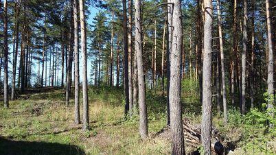 Продажа участка, Прудище, Калининский район, Ул. Прибрежная - Фото 1
