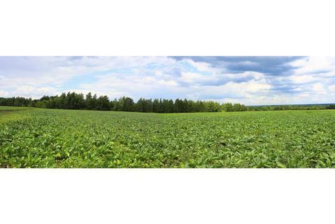 Продается участок (сельхоз. назначение) по адресу с. Крутогорье - Фото 1