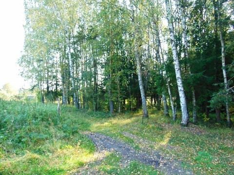 Угловой участок, крайний к лесу в дер.Корытово - 89 км от МКАД - Фото 3