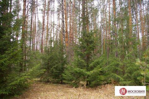 Лесной участок 23 сот, ПМЖ, 30 км. Варшавского или Калужского ш. - Фото 1