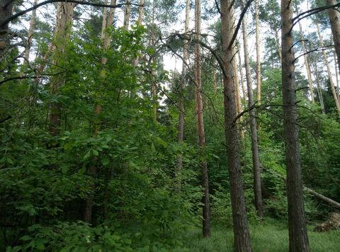 Д. Маслово нп «Блинчиково» участок 24.19 соток ИЖС красивейшего леса. - Фото 3