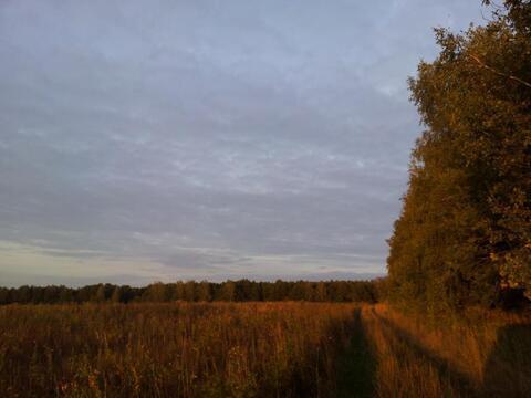 Продажа поляны в лесу 10 га на берегу озера - Фото 4