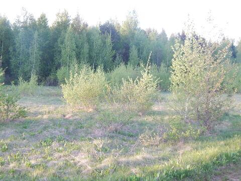Участок 20 соток в п. Дорохово около леса - Фото 2
